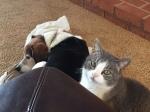 Read our cat Bella's mind.